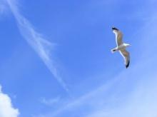 ทำไมนก บินต้านลม