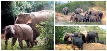 เที่ยวชมช้างป่าที่อุทยานแห่งชาติกุยบุรี