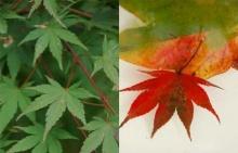 ทำไมใบไม้จึงเปลี่ยนสีในฤดูใบไม้ร่วง