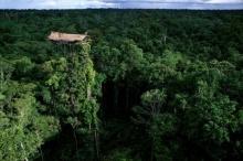 บ้านต้นไม้ ของชาวเผ่าใน ปาปัวนิวกินี