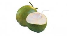 เผยผลวิจัยพบมะพร้าวให้ประโยชน์สูง แนะเร่งส่งเสริม