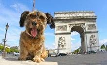 ออสการ์ หมาเที่ยวรอบโลก จากไปแล้วอย่างสงบ