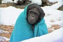 น่ารัก!! หนาววว จนต้องห่มผ้า และจิบชาร้อนๆ