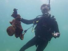แมวน้ำสู้ปลาหมึกยักษ์ที่ออสเตรเลีย