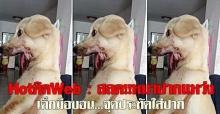 Hot ติด Web : สลด!!หมาปากแหว่ง
