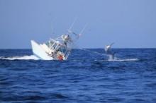 กัปตันพลาดเจอปลายักษ์ลากเรือล่ม