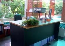 ไม้ประดับมงคล บน โต๊ะทำงาน