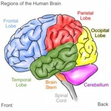 10 อุปนิสัยที่ไม่ดีและมี ผลต่อสมอง