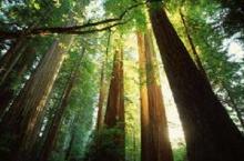 วิธียืดอายุต้นไม้