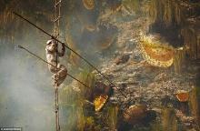 ระทึก นักล่าเสี่ยงชีวิตเก็บน้ำผึ้งบนตีนเขาหิมาลัย รังใหญ่ที่สุดของโลก