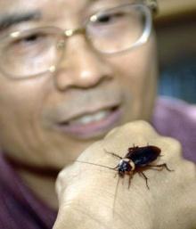 โรคที่เกิดจากแมลงสาบ