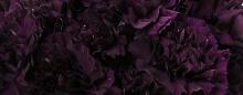 ดอกไม้ กับ ตำนานของการเกิดและตาย