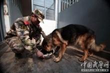 การจากลาครั้งสุดท้ายของ สุนัข กับ นายทหารคู่ใจ