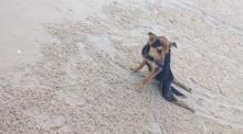 สุดซึ้ง! สาวแคนาดา พาหมาพิการจากไทยกลับไปรักษา