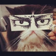 เทรนด์ใหม่จากญี่ปุ่น! ถ่ายตาแมวแบบ อนิเมะ