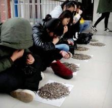 ครูจีนสั่ง นร. แทะเมล็ดทานตะวัน 50 กก. เพราะกินขนมในห้อง