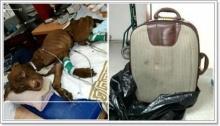 สุดเศร้า! หมาพิทบูลฯ ผอมแห้งถูกทิ้งยัดกระเป๋าเดินทาง!!