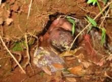 ความจริงที่โหดร้าย! 5 เด็กทารกถูกทิ้ง รอดชีวิตได้อย่างปาฏิหาริย์