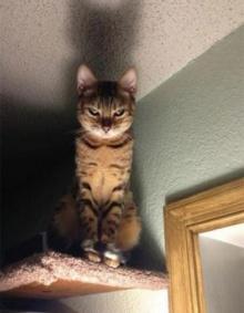 ดูซะ! แล้วจะรู้ว่า แมว เป็นสัตว์ที่คิดจะครองโลก!