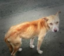 สาวใจบุญลงทุนแกล้งตาย นอนกับพื้นถนนเป็นเวลานาน เพื่อช่วยหมาจรจัด