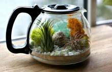 DIY สวนจิ๋ว จากหม้อต้มกาแฟ