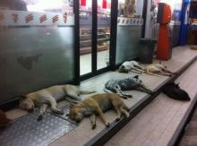 คือดีอ่ะแกร!! ร้านนี้เริ่ดเลื่อนขั้นน้องหมา จากเฝ้าหน้าร้าน เป็นพนักงานซะเลย!!