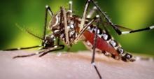 'ซิก้า'ไวรัสชนิดใหม่ อันตราย ไร้ยาป้องกัน