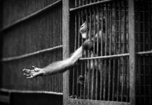 ฉันผิดอะไร!!ภาพสุดสะเทือนใจของเหล่าสัตว์ที่ถูกขังตลอดชีวิต