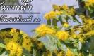 ที่มาของ ต้นรวงผึ้ง พรรณไม้ประจำพระองค์ รัชกาลที่ 10