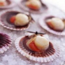 หอยเชลล์กับซอสตาต้า