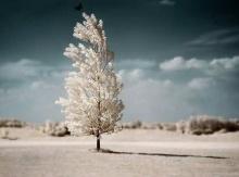 ต้นไม้ กับ ไม้ขีดไฟ