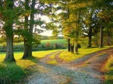 เส้นทางที่เลือกเดิน