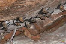 ทำไมค้างคาวจึงอยู่ในถ้ำ