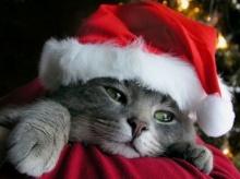 วอลเปเปอร์ Joyful Christmas