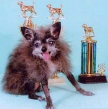 สุนัข น่าเกลียด ที่สุดในโลก ( Ugliest dog )