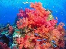 ข้อคิดจากปะการัง
