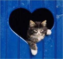 ความรักที่ยิ่งใหญ่ของแม่แมว