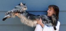 คลิป แมวที่ตัวยาาาาวที่สุดในโลก