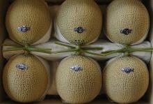 เชื่อหรือไม่! ที่ญี่ปุ่นผลไม้มีค่าดั่งทองคำ เมลอนลูกละเกือบ 7,000 ทำไมเขาจึงขายได้?
