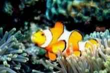ปลาหายใจใต้น้ำได้อย่างไร
