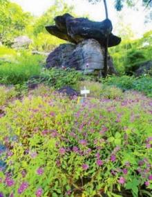 เทศกาลชมดอกไม้บานบนลานหิน