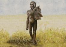 มนุษย์ฮอบบิต กลายเป็นคนแคระ-สมองเล็ก เพราะ ติดเกาะ