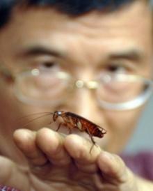 วิธีกำจัดแมลงสาบ