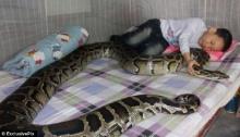 ขนลุก เด็กจีนนอนหลับกับงูเหลือม พ่อชอบใจปล่อยให้เป็นเพื่อนเล่น