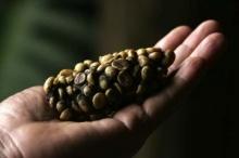 วิเคราะห์โกปี๊ ลูวัก ทำมาตรฐานกาแฟแพงสุดในโลก
