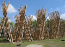 ไม้ไผ่แหลม