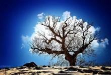 ต้นไม้ปุยเมฆ