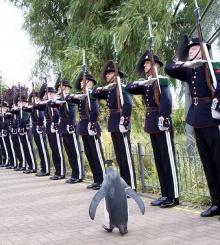 สุดทึ่ง!! เพนกวิน ประดับยศ เซอร์ ตัวเเรกของกองทัพนอร์เวย์!