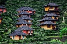 หนาวนี้ไปเที่ยว บ้านรักไทย ไร่ชาสไตล์จีนยูนนาน กันเถอะ