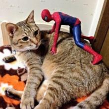 รู้ยัง? สไปเดอร์แมนเป็นคนรักแมวนะ!
